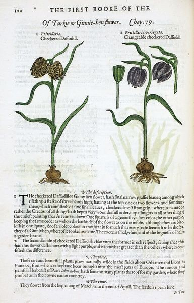 The Herball or Generall Historie of Plantes Gathered by John Gerarde of London Master in Chirurgie