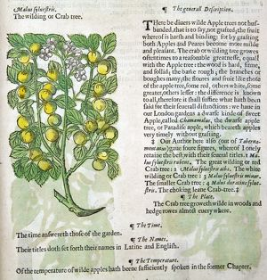 The Herbal, by John Gerade, 1633