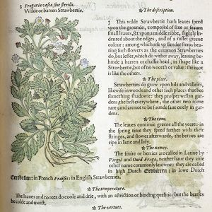 The Herball or Generall Historie of Plantes by John Gerarde, 1597