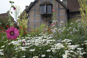 Shakespeare's Birthplace Garden, 2017